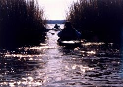 Paddling through the Patuxent marshes on a bright winter's day Photo