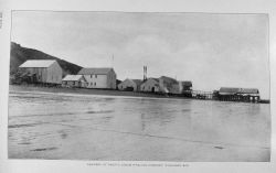 Cannery of Pacific Steam Whaling Company, Nushagak Bay Photo