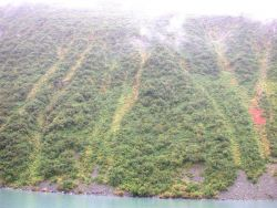 Kenai Fjords area from offshore showing low brush and beginnings of fall colors. Photo
