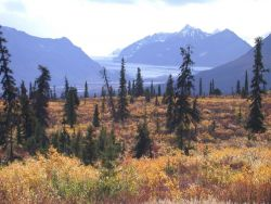 Looking up a glacial valley from near the treeline north of Anchorage. Photo