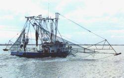 Shrimp boat. Photo