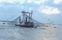 Shrimp boat Photo