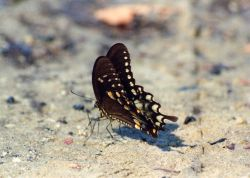 Butterfly on the beach. Photo