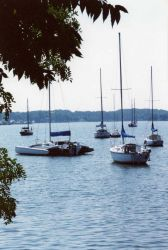 Sailboats moored in the West River. Photo