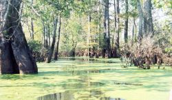 Algae covered waters Photo