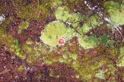 Toadstool and moss on the forest floor. Photo