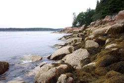 Periwinkle and seaweed covered granite shoreline. Photo
