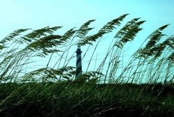 Cape Hatteras Lighthouse seen through the sea oats. Photo