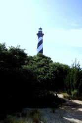 Cape Hatteras Lighthouse looming above the brush in the dune line. Photo