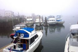 The harbor at Belfast on a foggy morning. Photo
