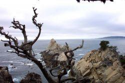 A magnificent headland at Point Lobos as seen through Monterey Cypress, Cupressus macrocarpa Photo