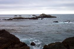 Kelp, rocks, and look closely to see the heads of sea lion on the offshore rocks at Point Lobos. Photo