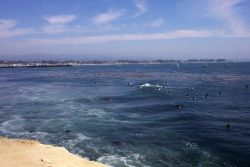 Surfers, sailboats, and the Santa Cruz wharf as seen from Lighthouse Point Photo