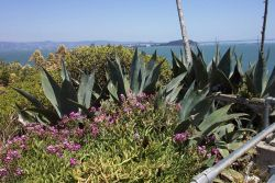 A garden near the warden's home on Alcatraz Island. Photo