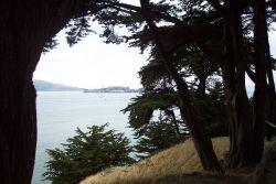 Alcatraz Island framed between two cypress trees at Fort Mason. Photo