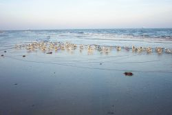 Sea gulls in the surf zone at Cape Henry. Photo