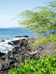 A rocky lava shoreline. Photo