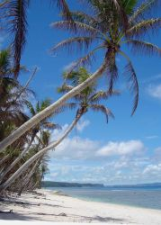 Palm trees overhanging a beach on Guam. Photo