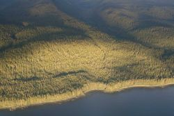 The timbered shores of Admiralty Island as seen from the air. Photo