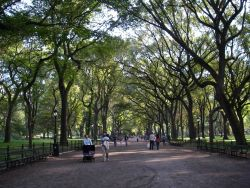 Central Park on an early fall afternoon. Photo