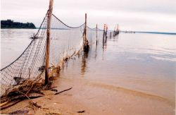 Illegally set poundnets too close to shore. Photo
