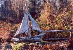 Art from driftwood Photo