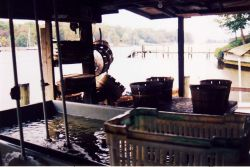 An oyster processing station Photo