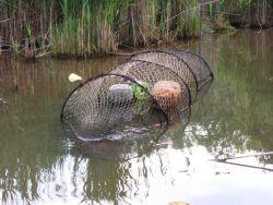 Fyke net set for turtles Photo