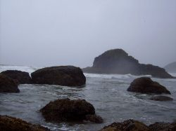 Rocks, surf, fog, seaweed, and tide pools at Ecola State Park. Photo