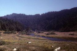 A beautiful stream valley on the Northwest coast. Photo