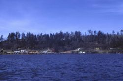 Washington coastal bay with small lumber mill Photo