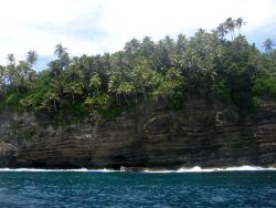 Cliffs and palm trees at Larsen's Bay Photo