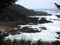 Trees, surf, rock, and fog. Photo