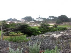 The Point Pinos Lighthouse seen over the Asilomar Dunes. Photo