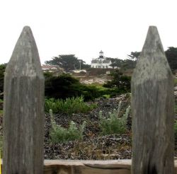 The Point Pinos Lighthouse bracketed between fence posts on the Asilomar Dunes. Photo