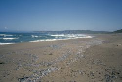 Point Reyes Great Beach Photo