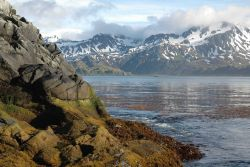 Kelp forest, calm water and spectacular mountain scenery Photo