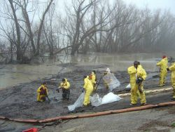Cleanup efforts after oil spill Photo
