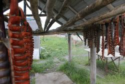 Drying coho salmon on racks Photo