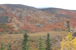 Autumn on the tundra north of Whitehorse in the Ogilvie Mountains. Image