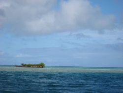 A deserted barge left on the reef which has become a vegetated islet. Image
