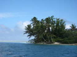 A tropical islet with palm fronds oriented in the direction of the prevailing winds. Photo