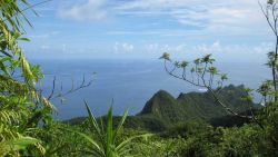 A view over the lush Samoan vegetation to the Pacific Ocean Image
