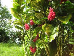 Beautiful red tropical flowers. Photo