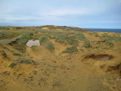 Erosion along coastal dune field Photo