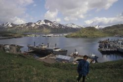 A view of Dutch Harbor with fishing vessels and a large converted freighter being used as a cannery ship. Image