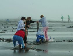 A family digs for clams in the Pacific Northwest Photo