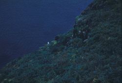 A kittiwake head is seen just above the cliff-line of St Photo
