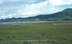 Kodiak Island cattle ranching Photo