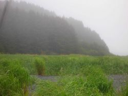 Wetlands in a stream valley adjacent to the sea. Photo